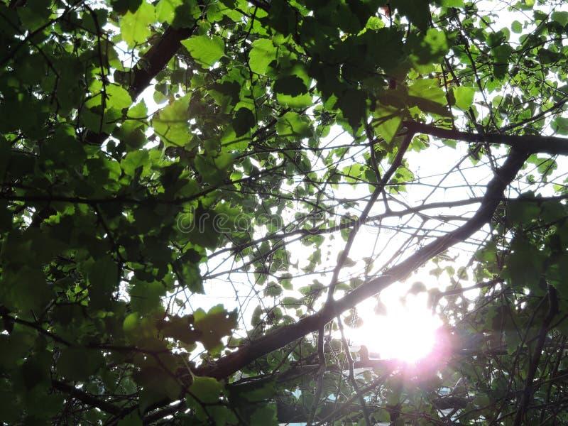 Sonnenschein durch Bäume stockfotos