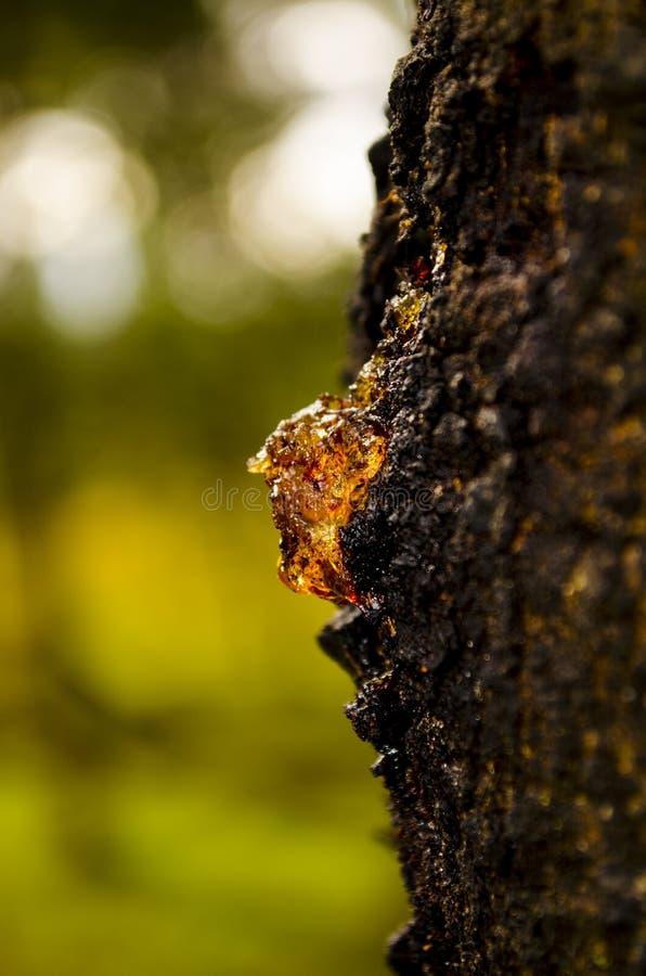Sonnenschein durch einen Klecks des Baumsafts stockfoto