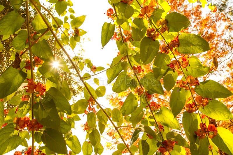 Sonnenschein durch Reben stockfotos