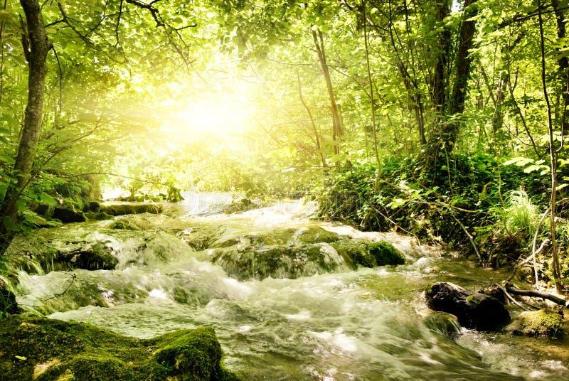 Sonnenschein in einem Wald lizenzfreie stockbilder