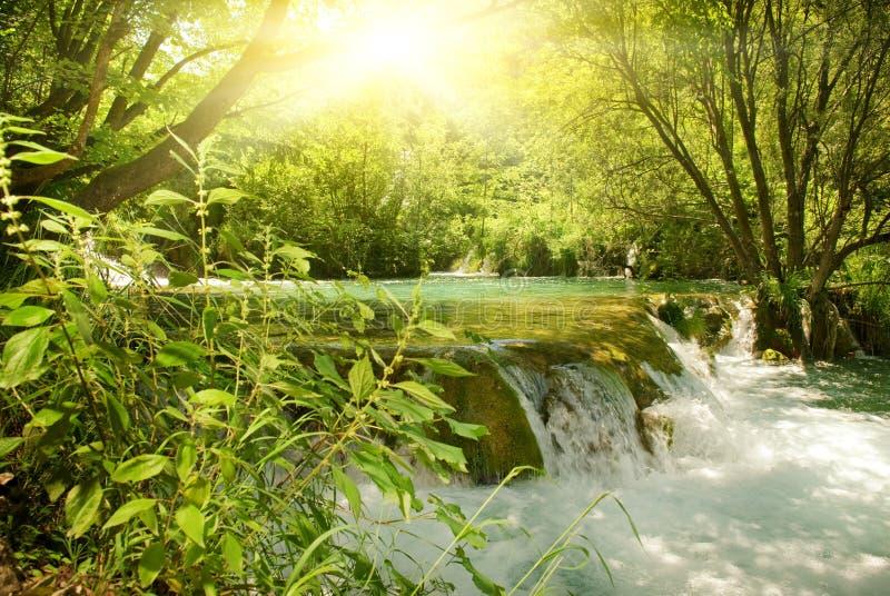 Sonnenschein in einem Wald stockfotografie