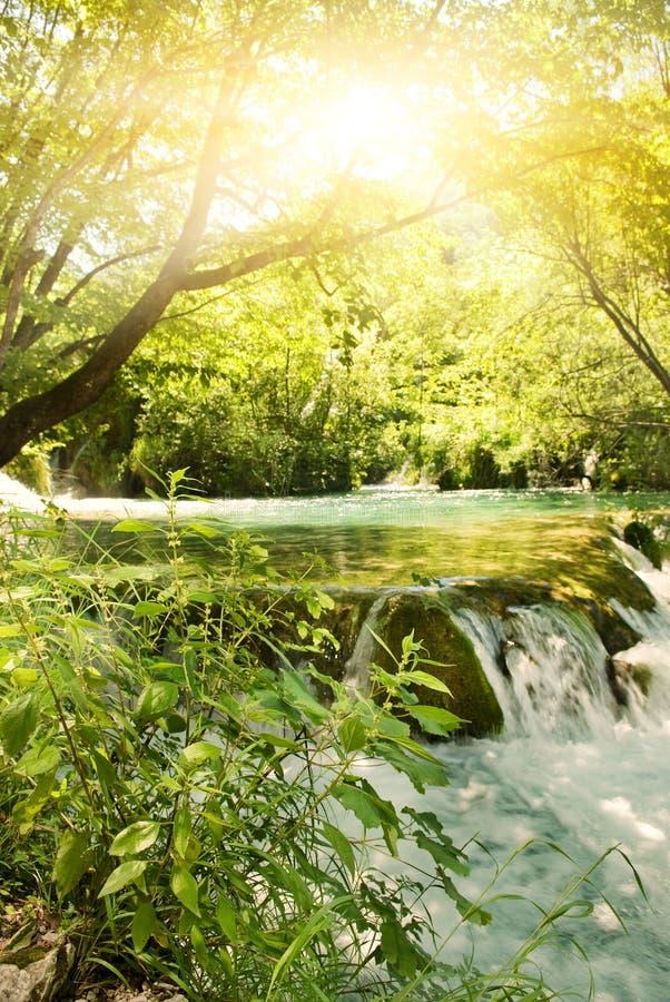 Sonnenschein in einem Wald lizenzfreies stockbild
