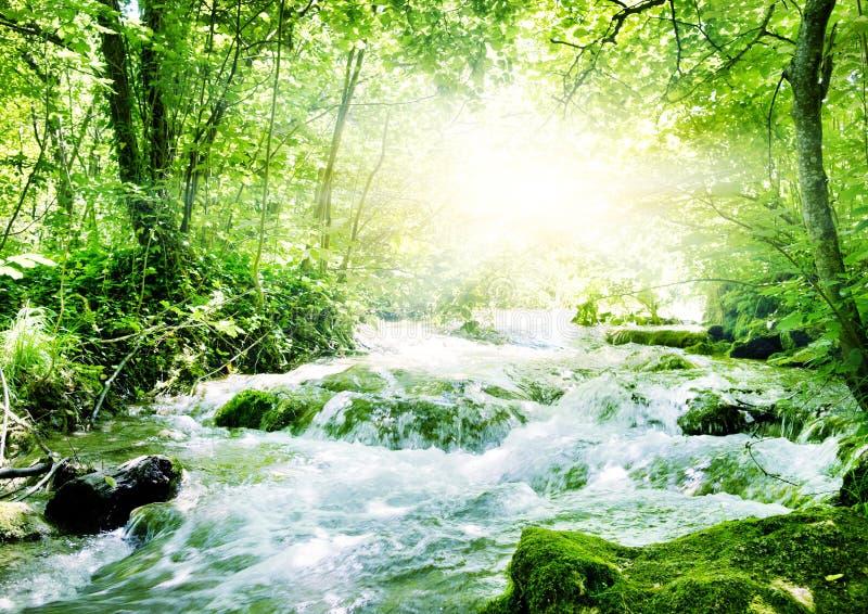 Sonnenschein in einem Wald lizenzfreie stockfotografie