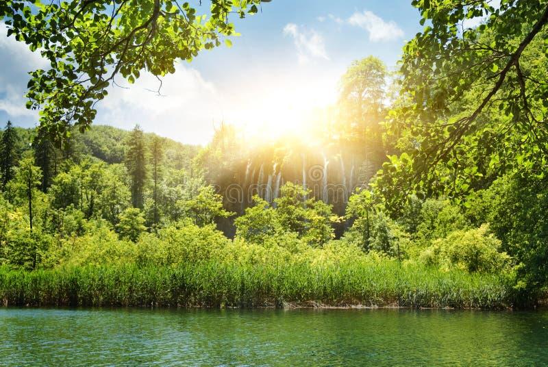 Sonnenschein in einem Wald stockfotos