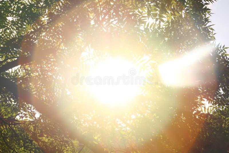 sonnenschein himmel Heller Sonnenschein im Himmel Sonnenlichtkreise stockfotografie