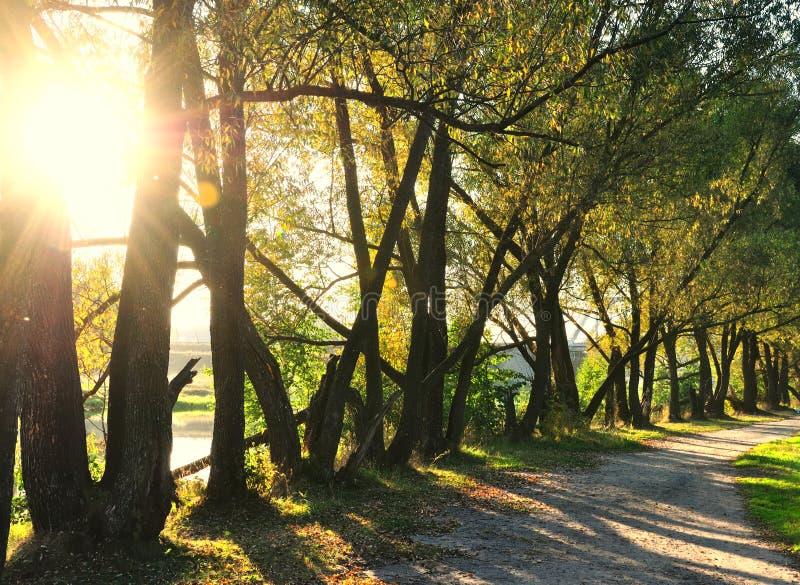 Sonnenschein im grünen Wald stockfoto