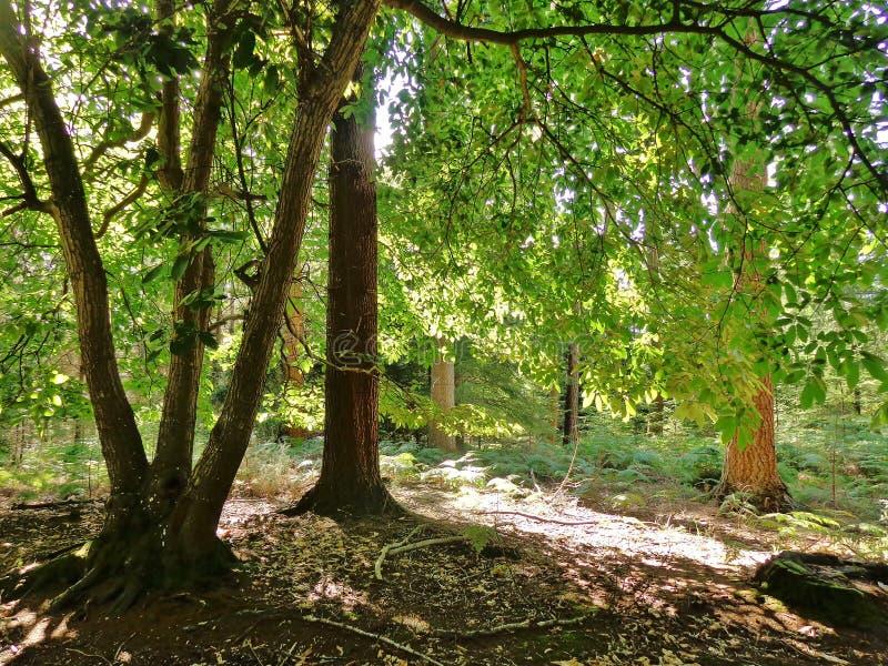 Sonnenschein im Wald lizenzfreies stockfoto