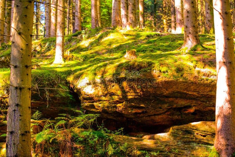 Sonnenscheinfell und -kranker durch Bäume lizenzfreie stockfotos