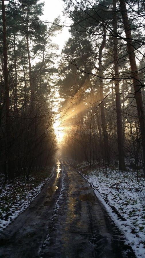 Sonnenstrahl in forrest lizenzfreie stockbilder