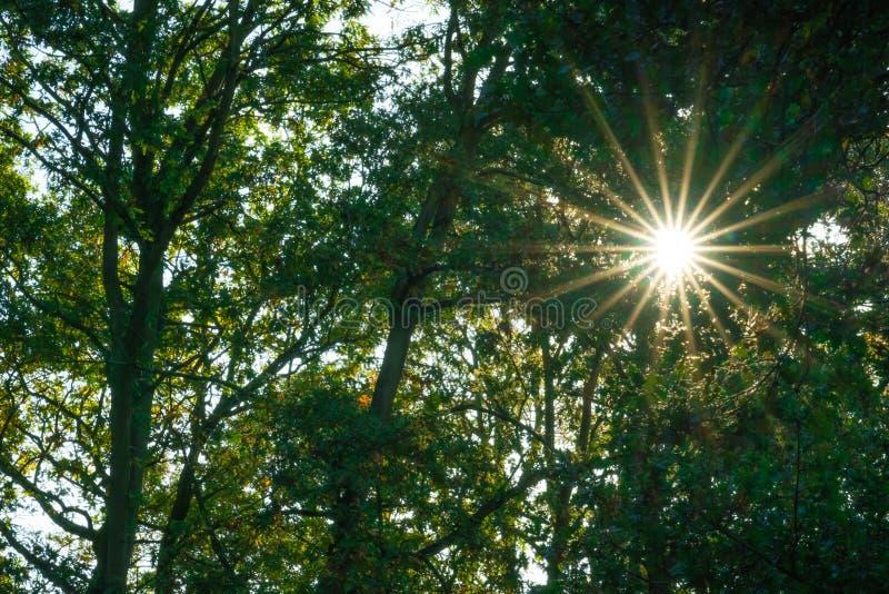 Sonnenstrahlen im Wald im Sommer lizenzfreie stockfotos
