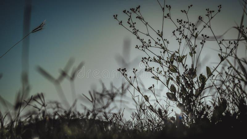 Sonnenstrahlen und -gras stockfotografie