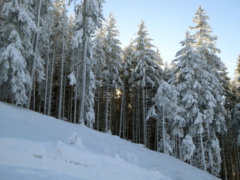 Sonnenuntergang über alpinem Wald hinaus stockfotos