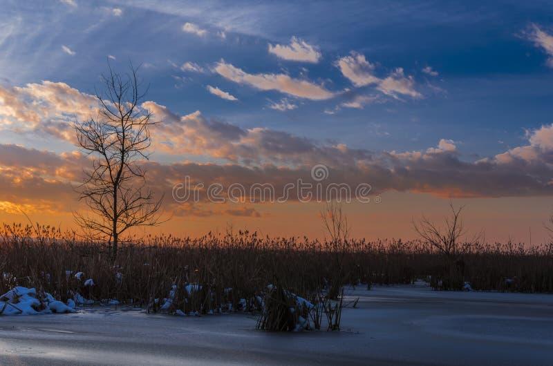 Sonnenuntergang über Baum und Schilf lizenzfreies stockfoto