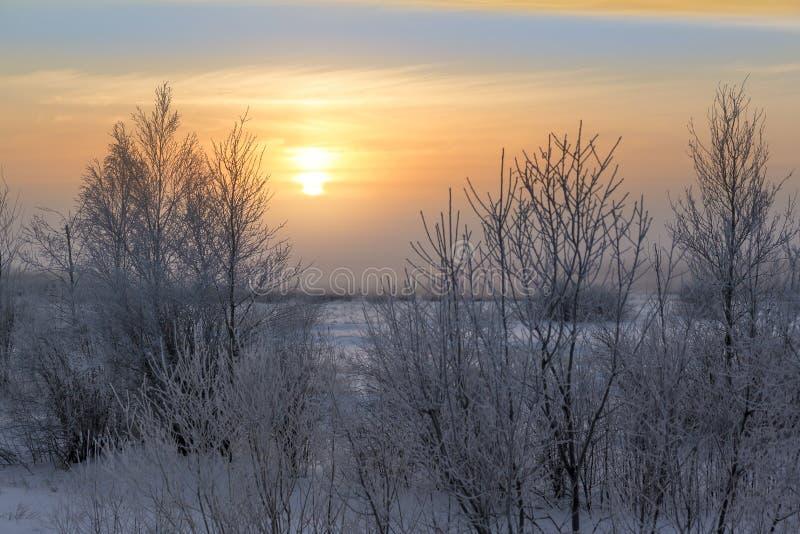Sonnenuntergang über dem flachen Wald im Januar stockfoto