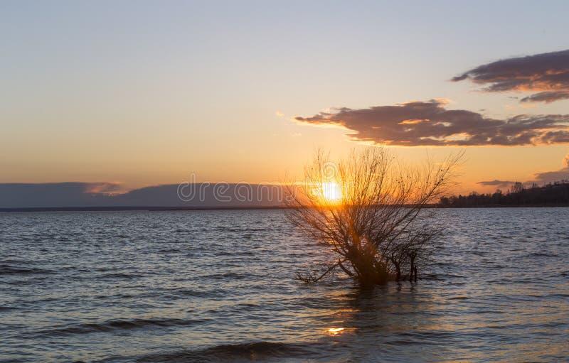 Sonnenuntergang über dem Flusshimmel bewölkt Wasser der Baum stockfotos