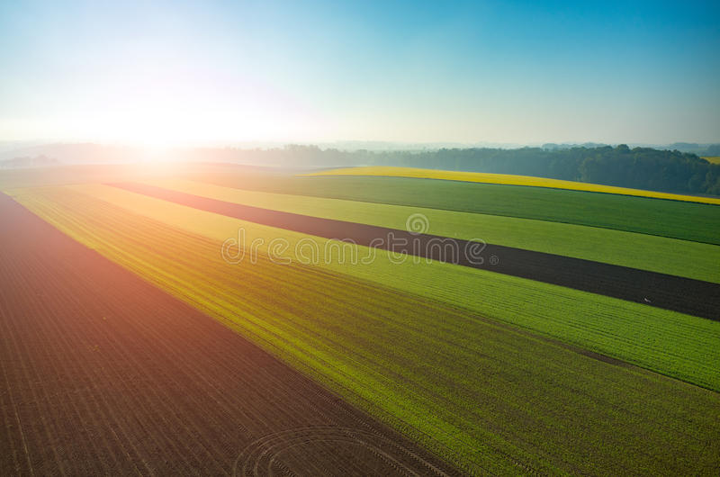 Sonnenuntergang über dem grünen großen Feld lizenzfreie stockfotos