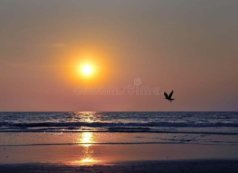 Sonnenuntergang über dem Ozean und ein Schattenbild des Fliegens krähen lizenzfreie stockfotos