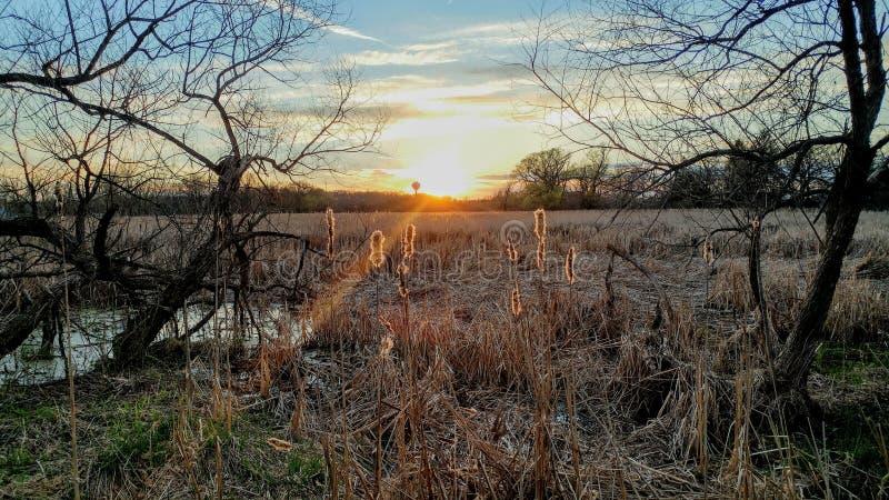 Sonnenuntergang über dem sumpfigen Sumpf, der auf Cattails hinaufklettert lizenzfreie stockfotografie