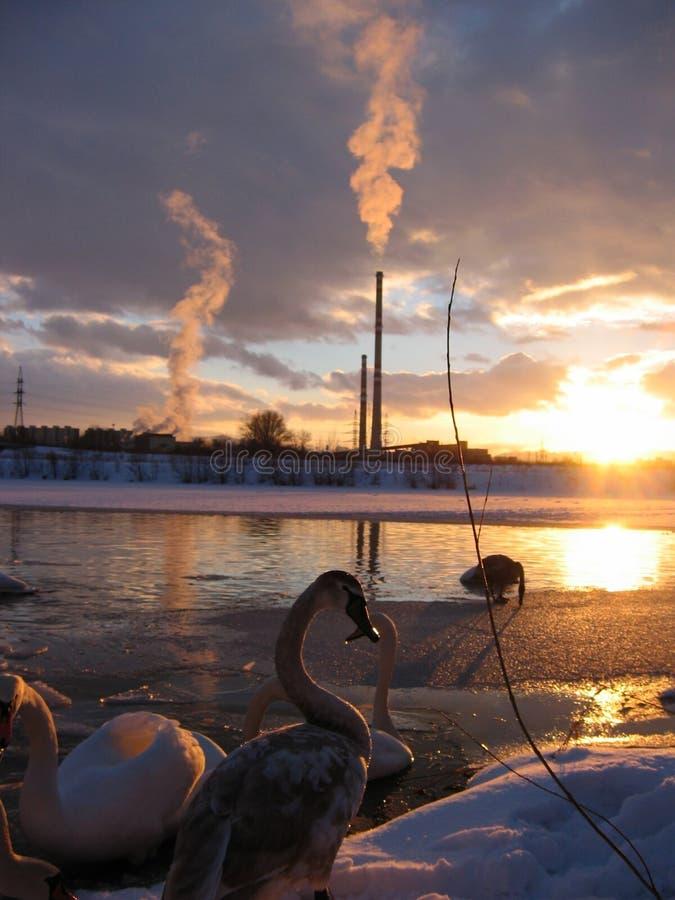 Sonnenuntergang über der Fabrik lizenzfreie stockfotografie