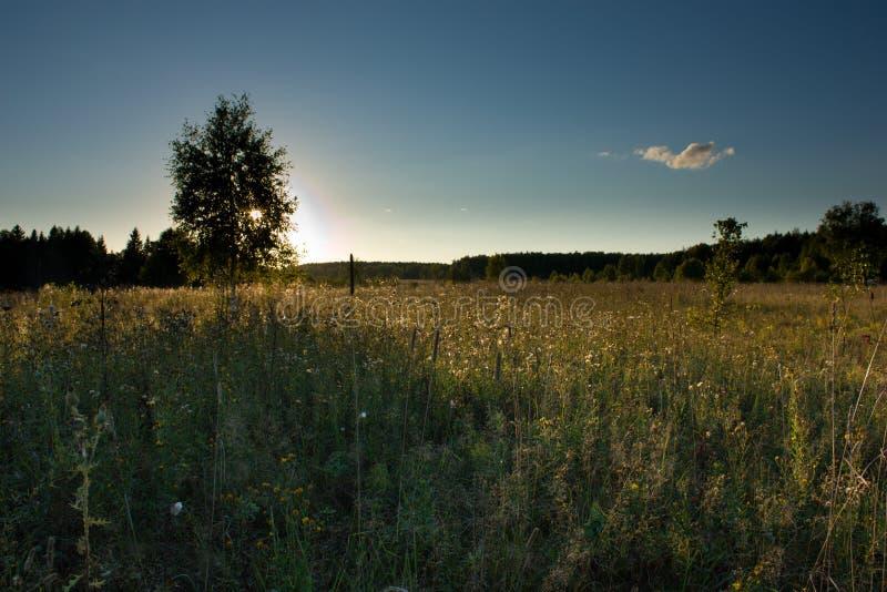 Sonnenuntergang über der Wiese stockfotografie