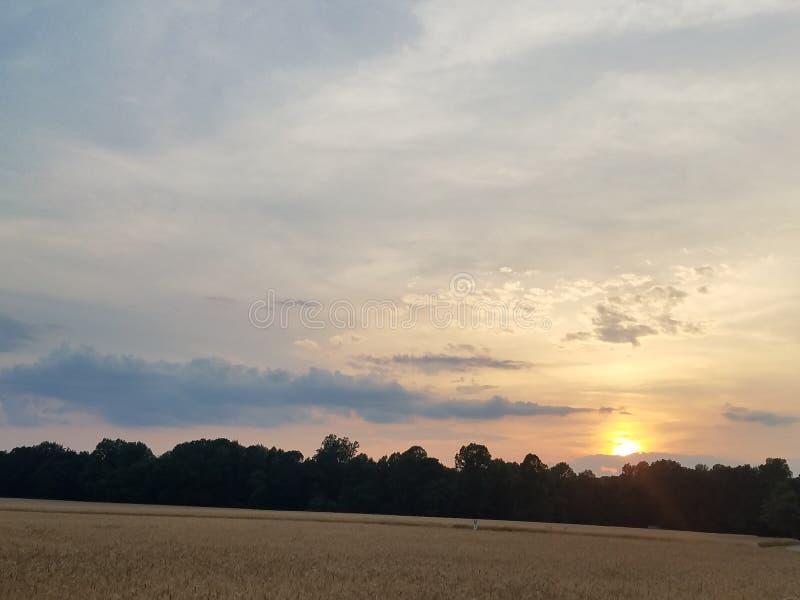 Sonnenuntergang über einem Weizenfeld lizenzfreie stockbilder