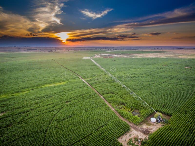 Sonnenuntergang über Feld von Ernten in Colorado lizenzfreies stockfoto