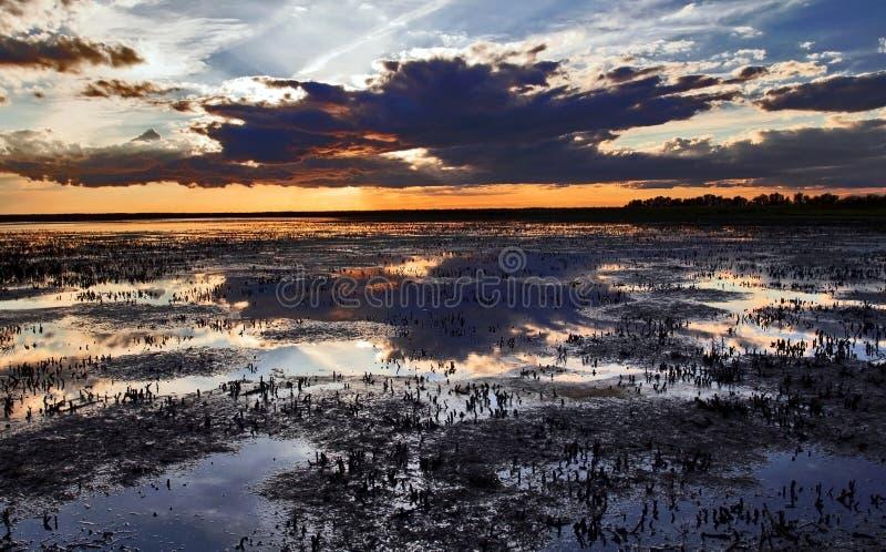 Sonnenuntergang über geernteten Röhrichten des Camargue lizenzfreies stockfoto