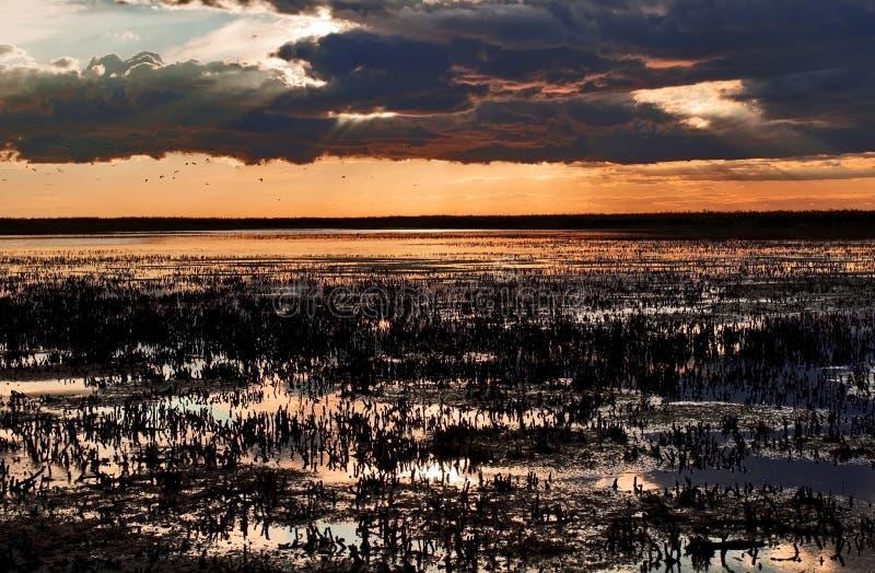 Sonnenuntergang über geernteten Röhrichten des Camargue lizenzfreie stockfotografie