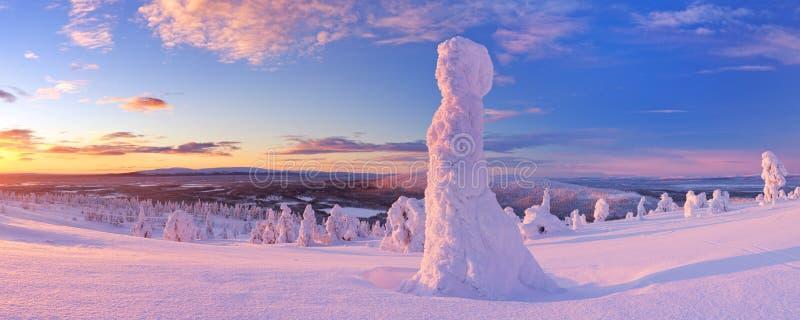 Sonnenuntergang über gefrorenen Bäumen auf einem Berg in finnischem Lappland stockfotografie