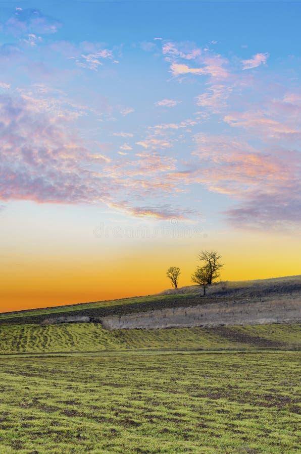 Sonnenuntergang über landwirtschaftlichem grünem Feld lizenzfreies stockbild