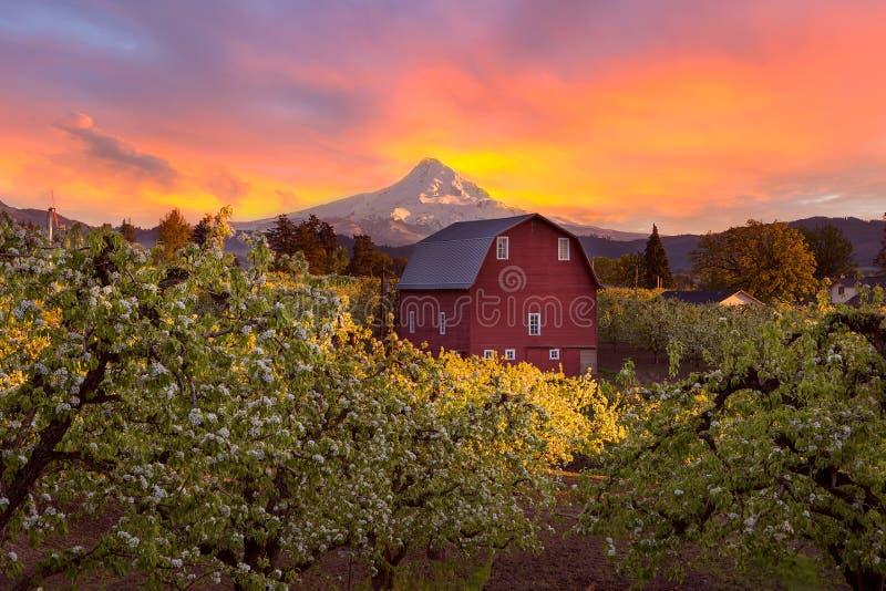 Sonnenuntergang über Mt-Haube und roter Scheune in Portland Oregon lizenzfreies stockbild
