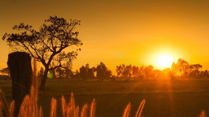 Sonnenuntergang über Reisfeld lizenzfreie stockfotografie