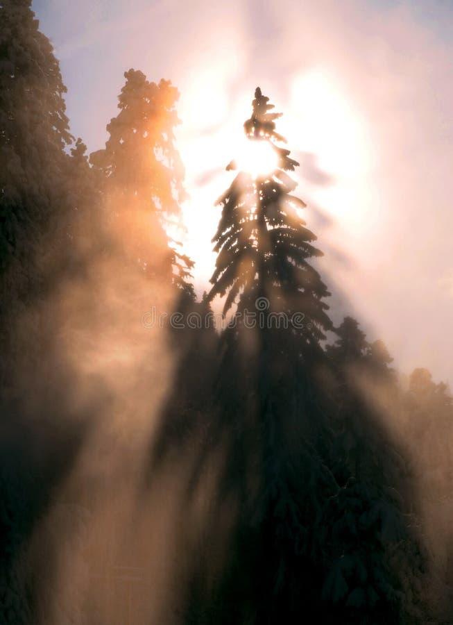 Sonnenuntergang über winterlichem Wald lizenzfreie stockbilder