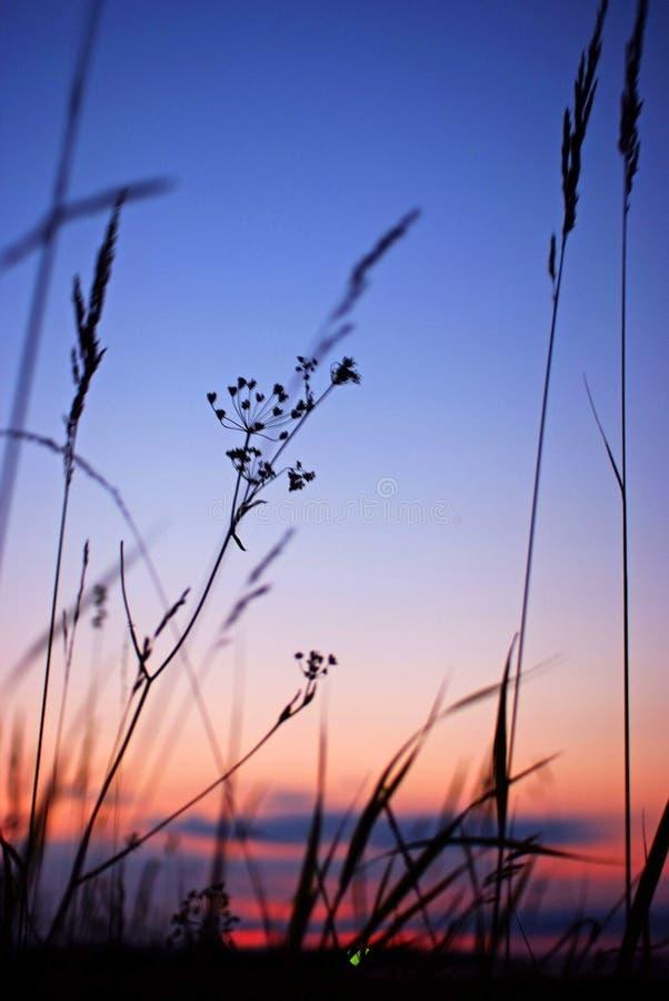 Download Sonnenuntergang stockbild. Bild von gras, sonnenuntergang - 106803955