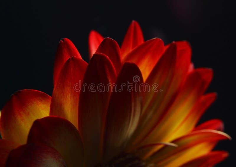 Download Sonnenuntergang stockfoto. Bild von sonnenuntergang, blumenblätter - 862232