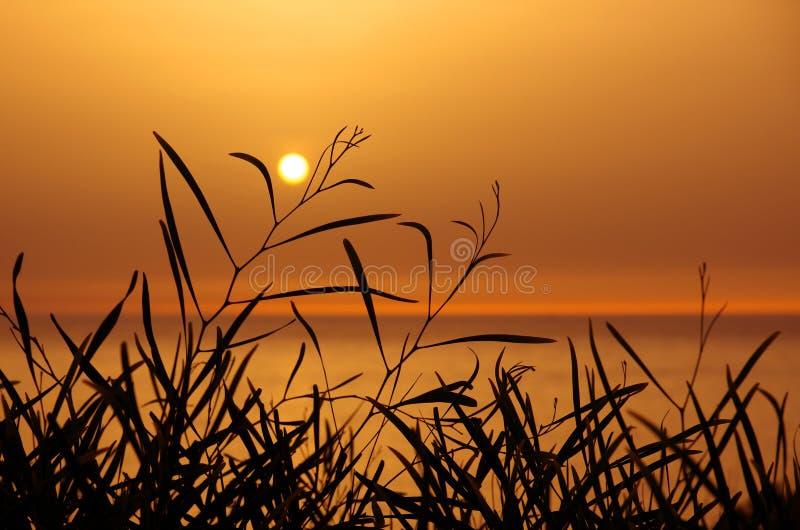 Sonnenuntergang auf Blättern lizenzfreie stockfotografie