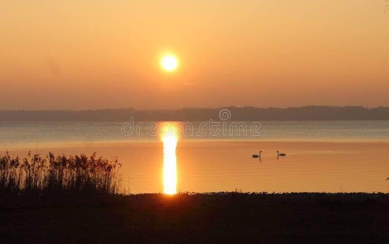 Sonnenuntergang auf dem Chiemsee See und zwei Schwänen lizenzfreie stockfotos