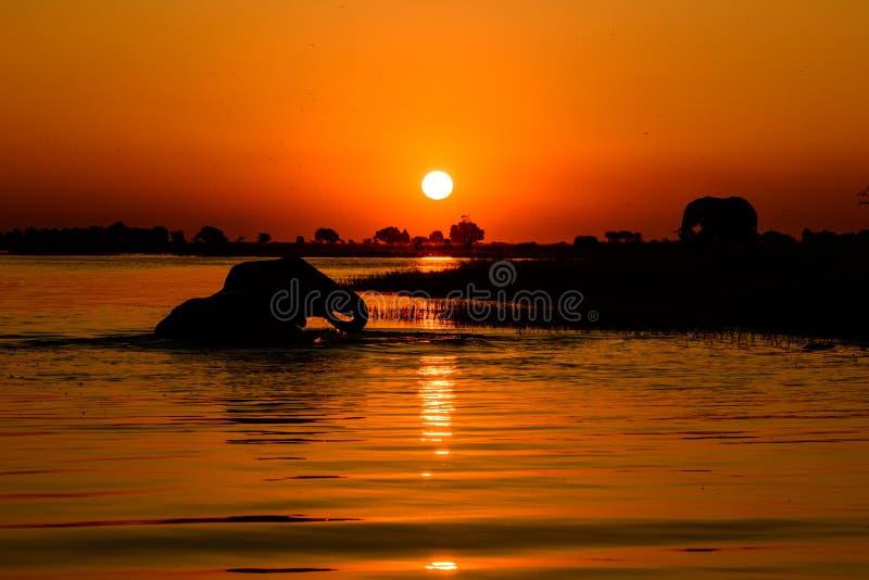 Sonnenuntergang auf dem Chobe-Fluss stockfoto