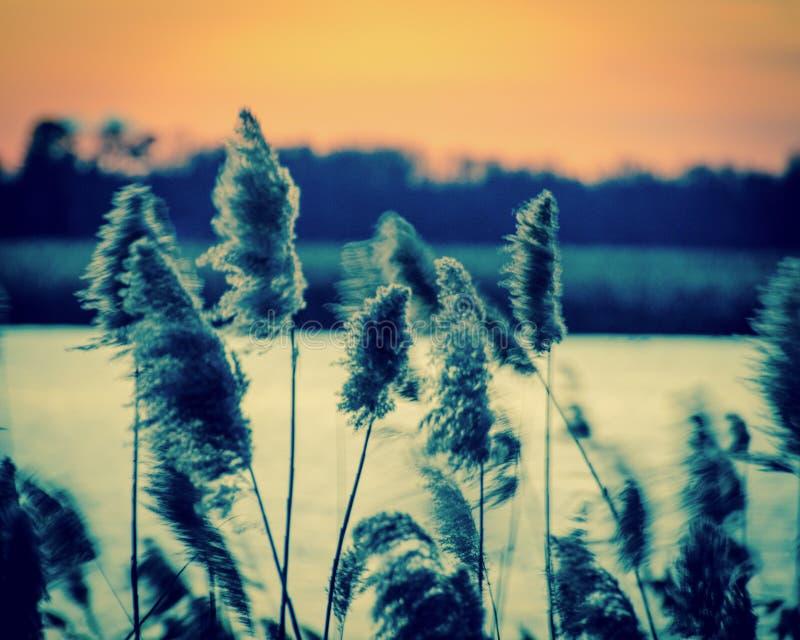 Sonnenuntergang auf dem Sumpf 2 lizenzfreie stockbilder