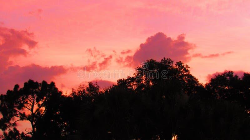 Sonnenuntergang auf den Bäumen lizenzfreie stockfotografie