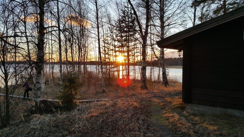 Sonnenuntergang auf den Bäumen mit Blendenfleck stockbild