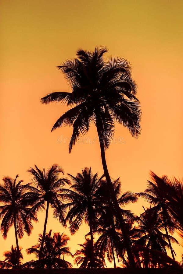 Sonnenuntergang auf den Palmen