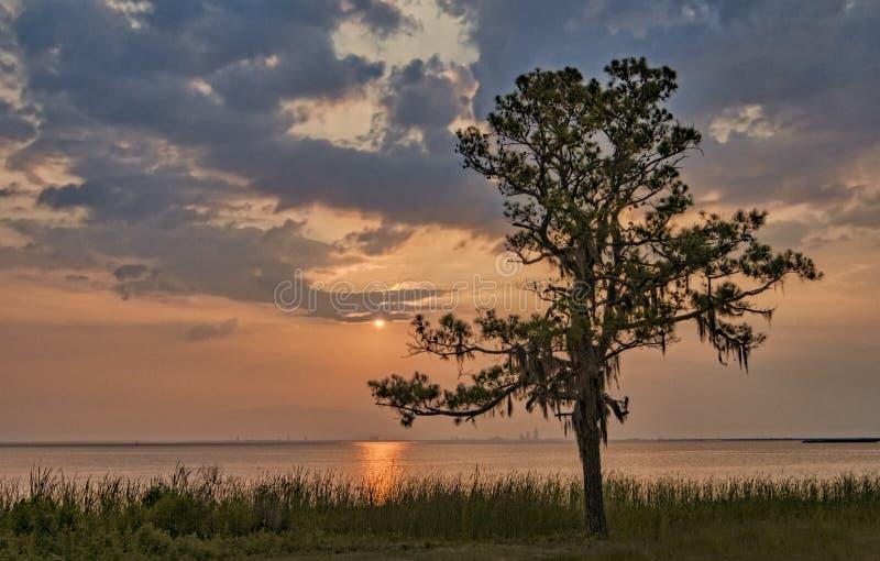 Sonnenuntergang auf der Bucht mit Baumschattenbild stockfotos