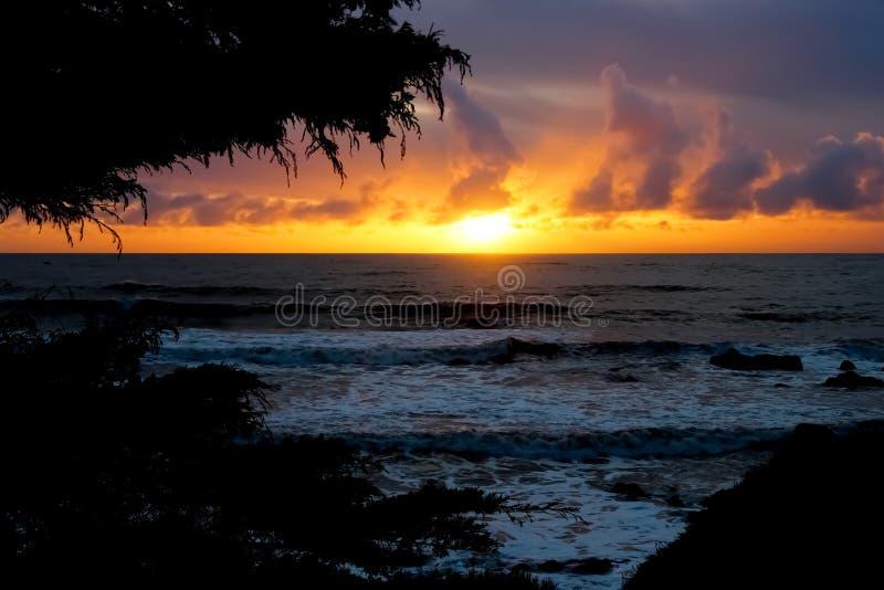 Sonnenuntergang auf der Küste gestaltet durch Bäume stockfotografie