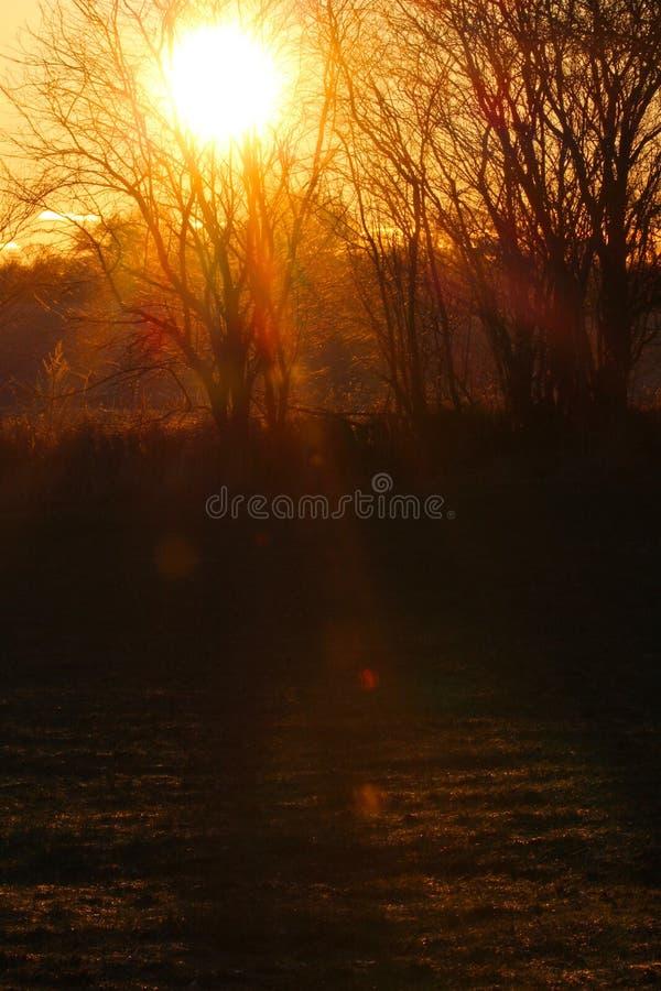 Sonnenuntergang auf der Wiese im Januar lizenzfreie stockfotografie