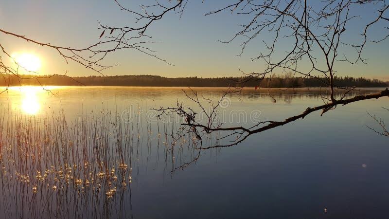 Sonnenuntergang auf einem See mit Anlagen und Bäumen lizenzfreie stockfotografie