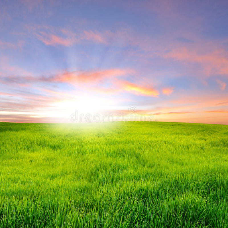 Sonnenuntergang auf Feld stockbilder