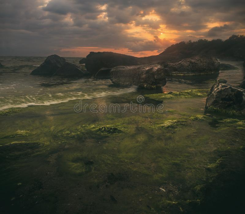 Sonnenuntergang auf Meerespflanze lizenzfreies stockfoto
