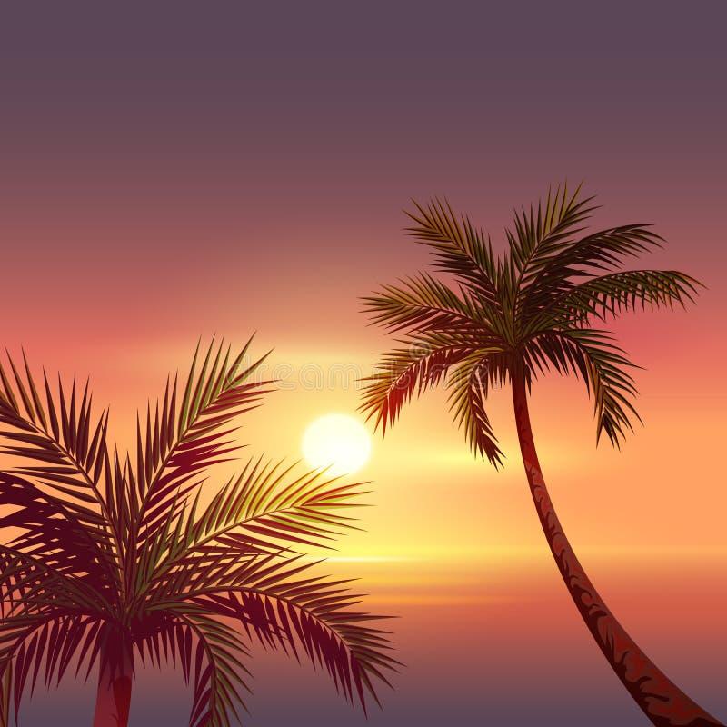 Sonnenuntergang auf tropischer Insel Schwarzes Schattenbild der Palme im roten Himmel stock abbildung