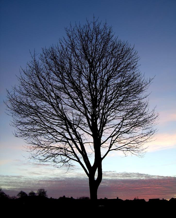 Sonnenuntergang-Baum-Schattenbild 1 lizenzfreie stockfotos